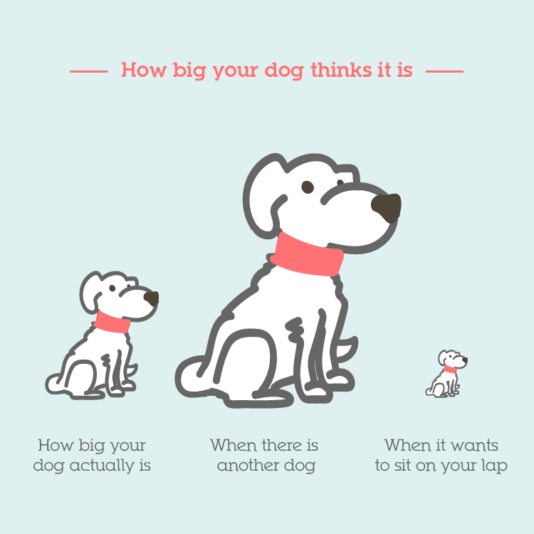 How big dogs think they are