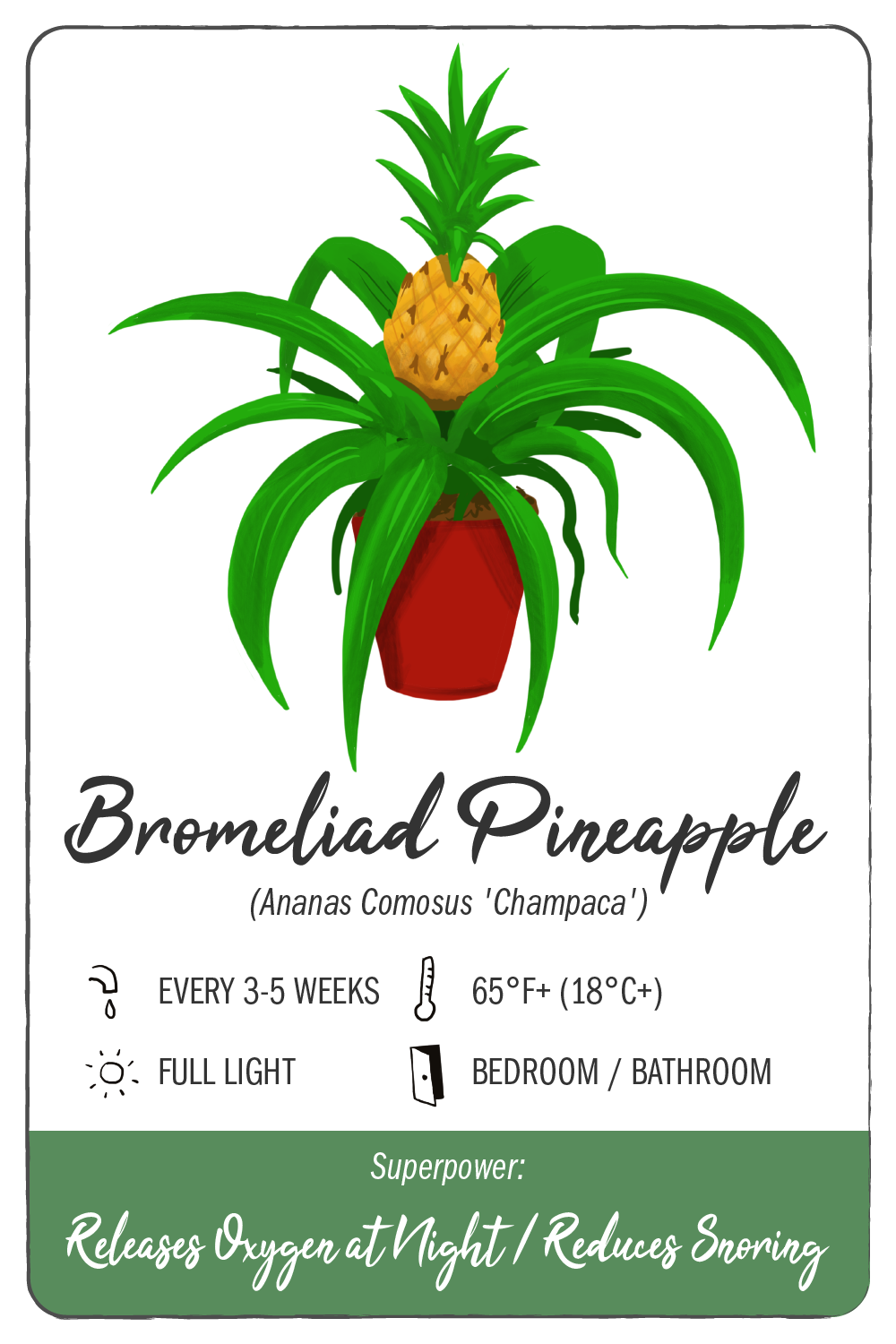 bromeliad pineapple - climadoor