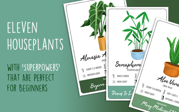 "11 Houseplants With ""Superpowers"" That Are Perfect For Beginners"