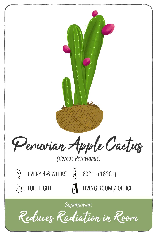 peruvian apple cactus - climadoor
