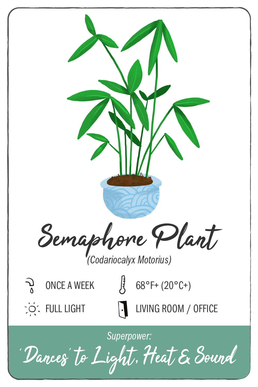 semaphore plant - climadoor