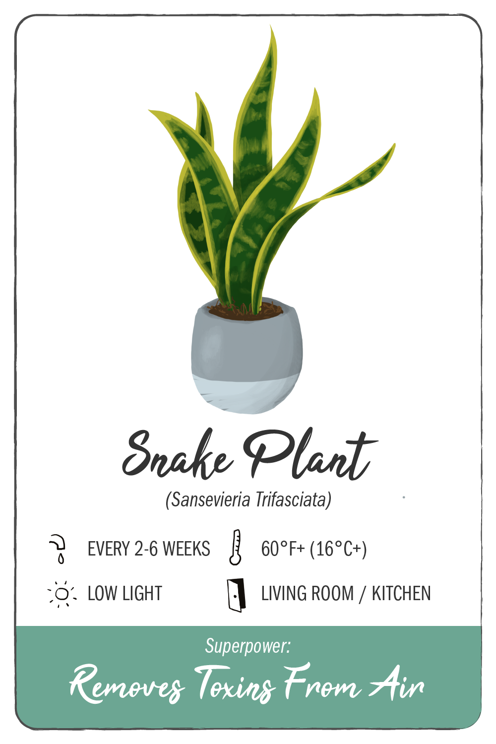snake plant - climadoor