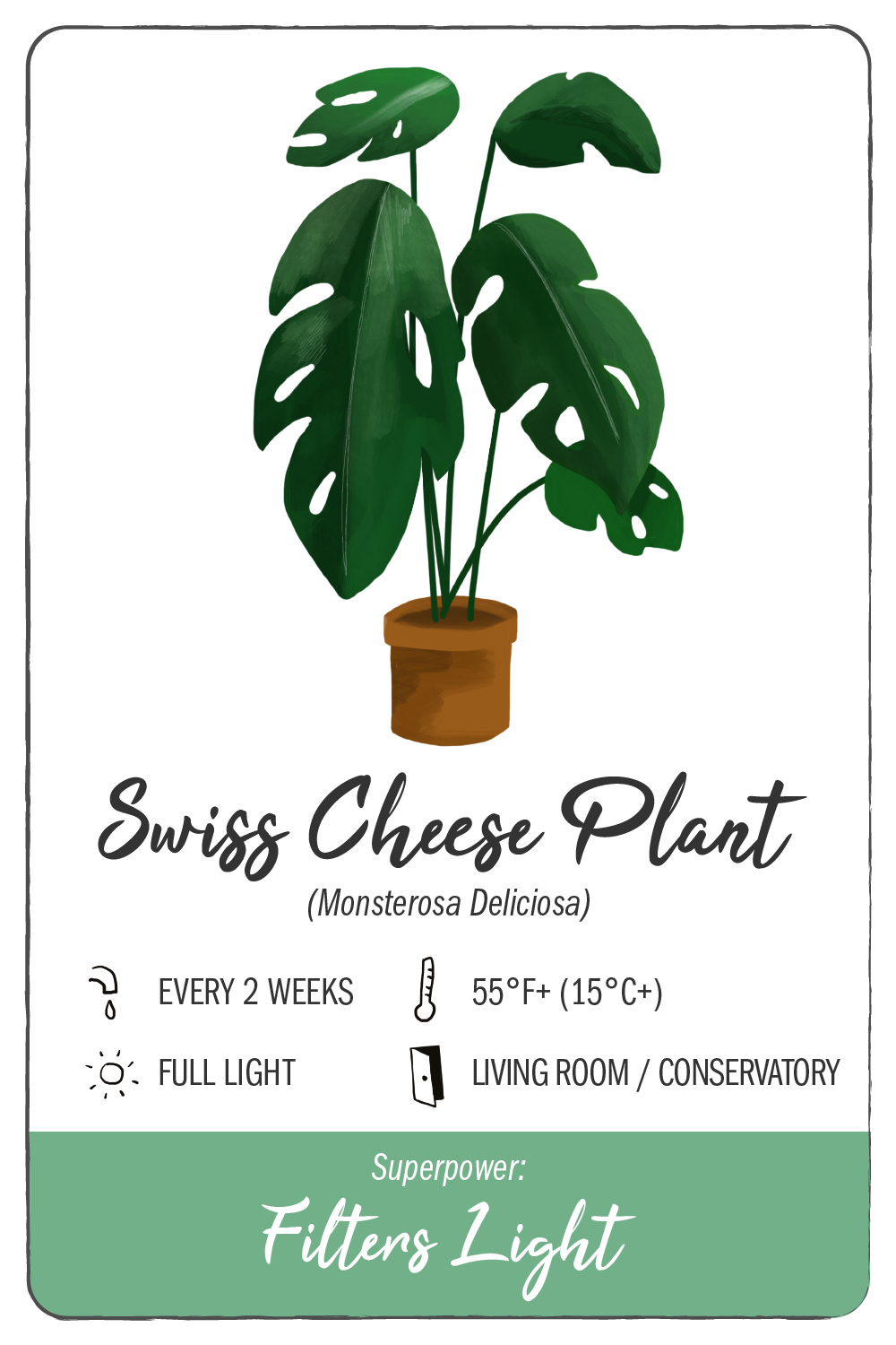 swiss cheese plant - climadoor