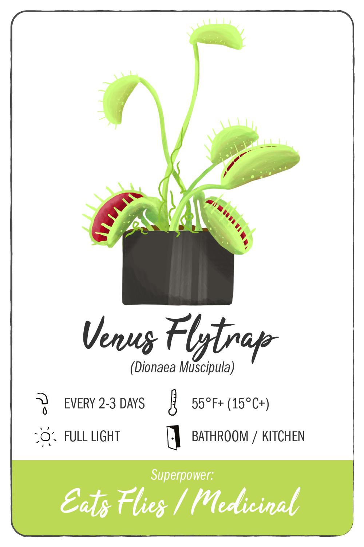 venus flytrap - climadoor