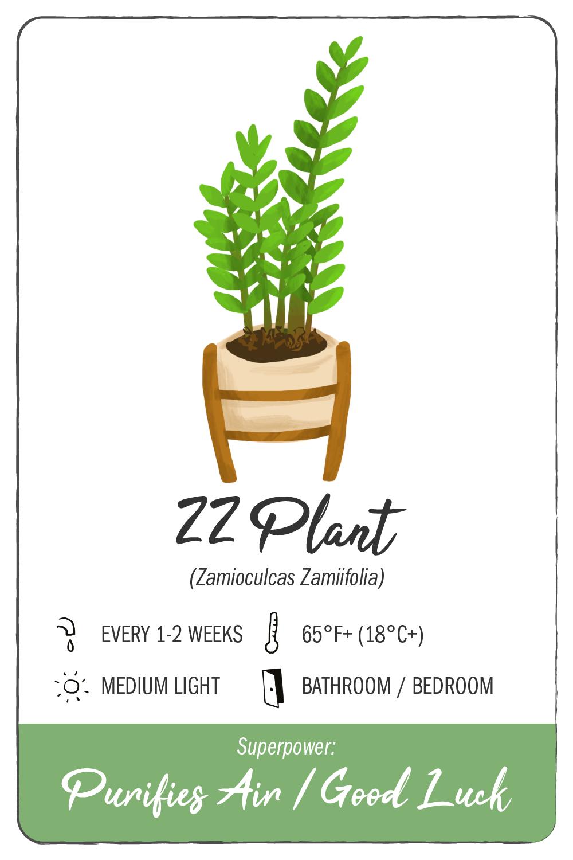 zz plant - climadoor